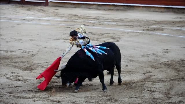 spanish matador juan jose padilla who was blinded in one eye by a goring in 2011 won the acclaim of the audience in cali colombia where he showed his... - bullfighter stock videos & royalty-free footage