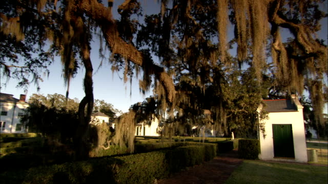 Spanish moss drips from a live oak next to a labyrinth on the grounds of a plantation. Available in HD.