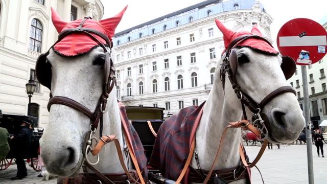 spanish riding school, vienna - the hofburg complex stock videos & royalty-free footage