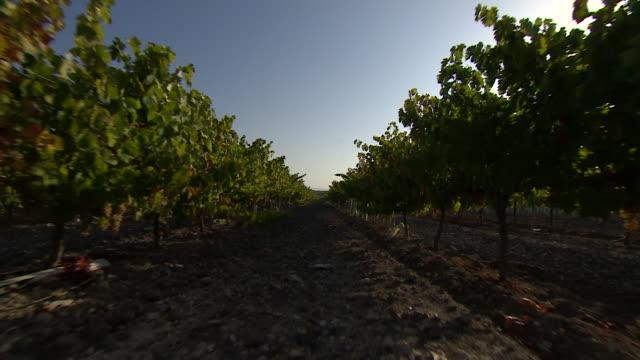 vídeos de stock e filmes b-roll de spanish vineyard, costa del sol - vinha