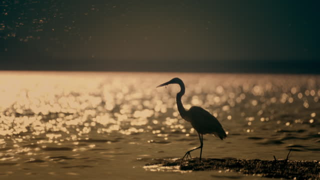 sparkling water and bird at sunrise - water bird stock videos & royalty-free footage
