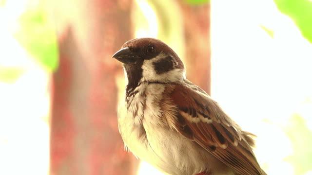 Reinigen van een feather Sparrow