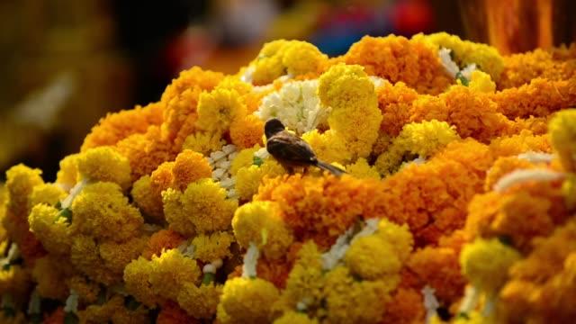 a sparrow feeding off the marigold flowers offering at erawan shrine - エラワン聖堂点の映像素材/bロール