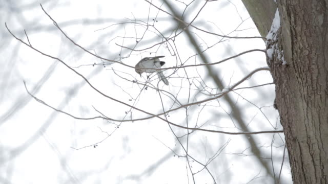 A sparrow lands on a tree branch in the winter woods