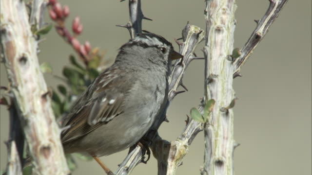 sparrow on branch - branch stock videos & royalty-free footage