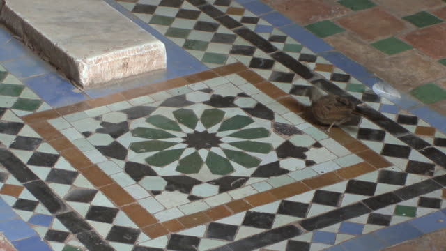 WS Sparrow on tile in Saadian Tomb, Marrakech, Morocco
