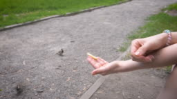 Sparrow takes food from a female's hands in the park