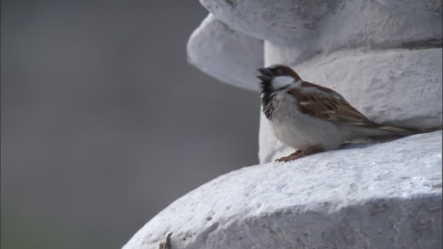 sparrow twitters on temple, gangotri, india available in hd. - communication stock videos & royalty-free footage