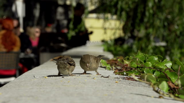 sparrow - crumb stock videos & royalty-free footage