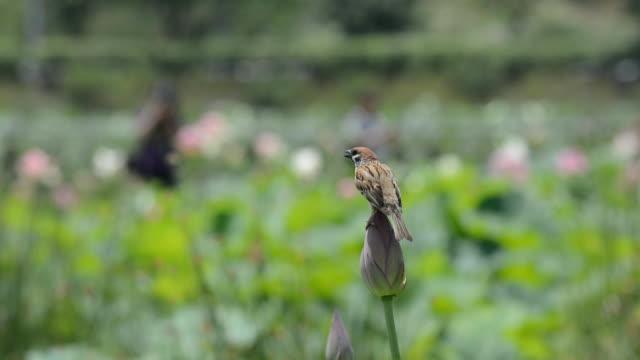 sparrow - スズメ点の映像素材/bロール