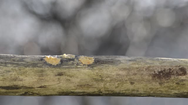 stockvideo's en b-roll-footage met sparrows, downy and red-bellied woodpeckers - vier dieren