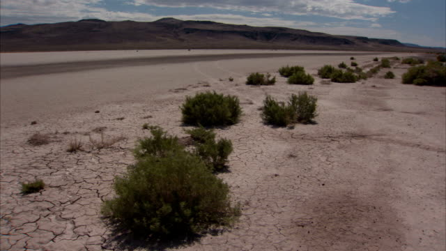 Sparse vegetation in the Nevada desert. Available in HD
