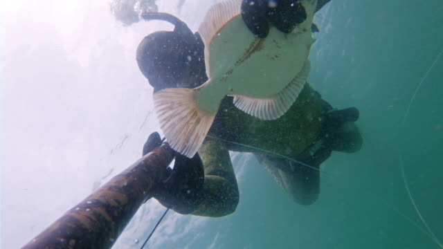 spear fishing - flounder stock videos & royalty-free footage