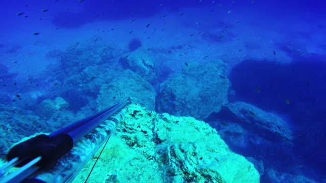 pesca in apnea nel mare blu dal punto di vista - arpone video stock e b–roll