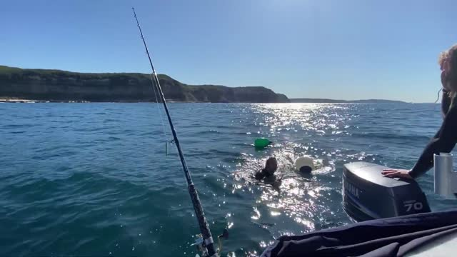 spearfishing trip off the coast of redhead beach in new south wales was the scene for an incredible rescue of a whale calf that had become entangled... - fin whale stock videos & royalty-free footage
