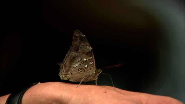 a speckled butterfly stands motionless on a human hand. - gliedmaßen körperteile stock-videos und b-roll-filmmaterial