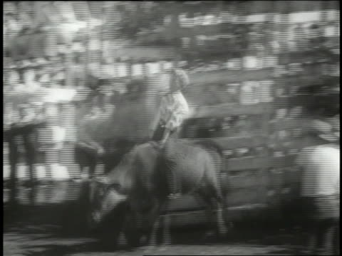 spectators watch rodeo events at southwest texas state teachers college. - bucking bronco stock videos & royalty-free footage