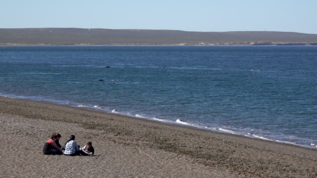spectators watching southern right whales in the bay - whale watching stock videos and b-roll footage