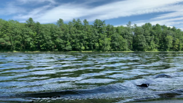 ein schnellboot fährt an einem sonnigen tag durch den androscoggin river surrounded by forest in durham, maine - motorboot stock-videos und b-roll-filmmaterial