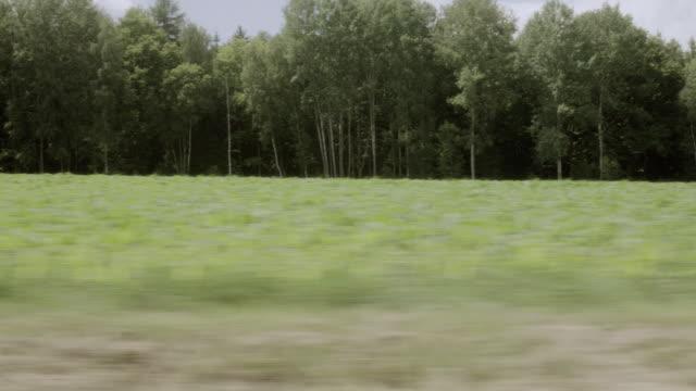 pov speeding past green fields in front of dense forest - side view点の映像素材/bロール