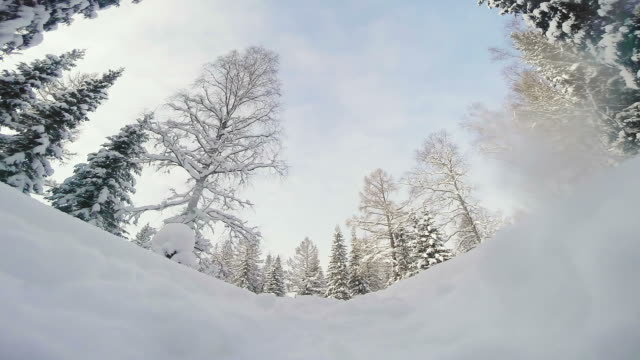 vidéos et rushes de speedy sled dogs racing over camera - une seule femme d'âge moyen