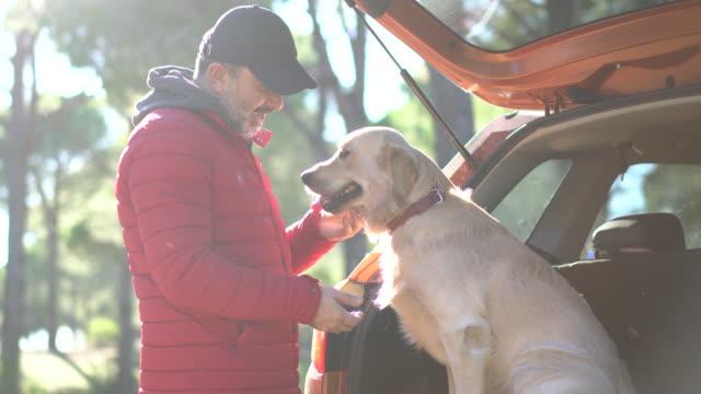 vidéos et rushes de passer la journée avec le chien dans la nature - golden retriever