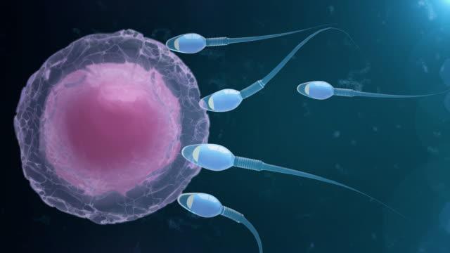 sperm and human egg - ovulazione video stock e b–roll