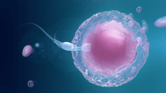 sperm and human egg - sperm stock videos & royalty-free footage