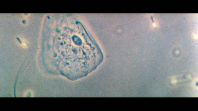ms sperm fertilizing ovum - sperm stock videos & royalty-free footage
