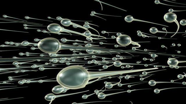sperm swimming (loopable) - matte image technique stock videos & royalty-free footage