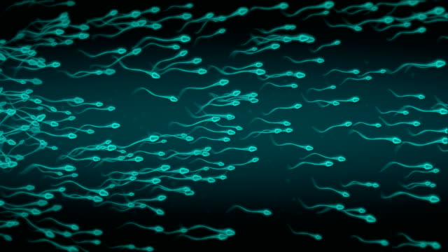 sperm - human fertility stock videos & royalty-free footage