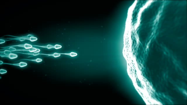 sperm - egg stock videos & royalty-free footage