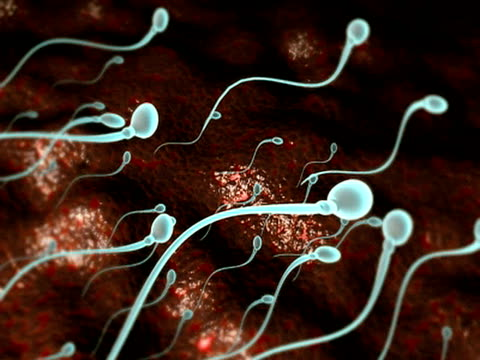 sperm - flagello video stock e b–roll