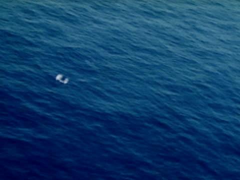 Sperm Whale in water