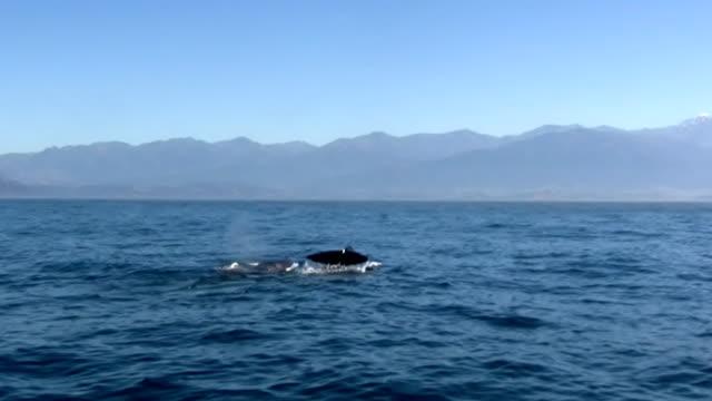 vídeos y material grabado en eventos de stock de pottwal - ballena cachalote