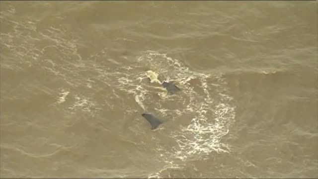 sperm whale washed up on hunstanton beach: aerials; england: norfolk: hunstanton: ext air views people gathered on beach and sperm whale stranded in... - sperm whale stock videos & royalty-free footage
