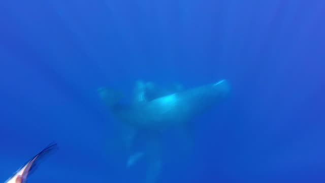 sperm whales socialising - sperm whale stock videos & royalty-free footage