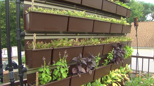 vídeos de stock, filmes e b-roll de wgn spices and plants on a rooftop wall garden at uncommon ground restaurant on aug 25 2014 in chicago - característica de construção