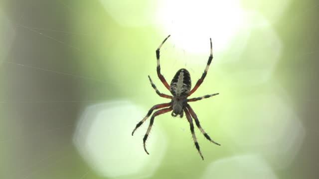 spider 1 - hd 30f - arachnid stock videos and b-roll footage
