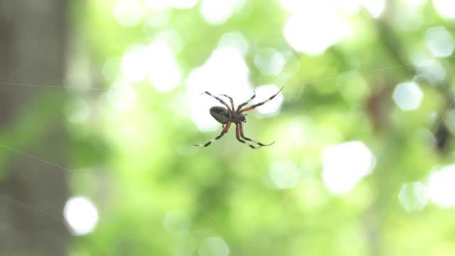 spider 2 - hd 30f - arachnid stock videos and b-roll footage