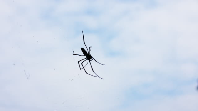 spider and web in old house, 4k - trapped stock videos & royalty-free footage