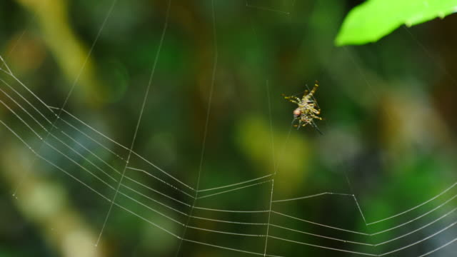 spider building its web. - spider web stock videos & royalty-free footage