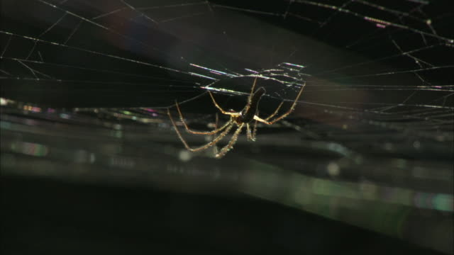 a spider clings to its web. - small stock videos & royalty-free footage