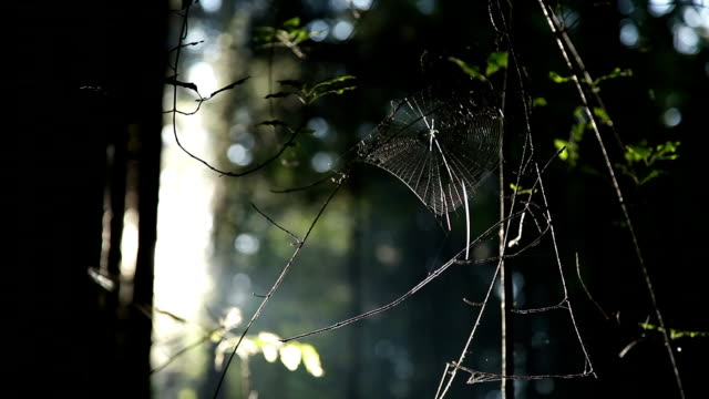 hd - spider cobweb in woods - arachnophobia stock videos & royalty-free footage