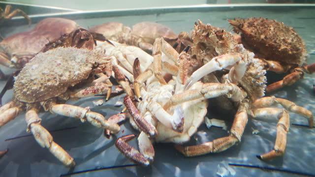 spider crab eating crab - カニ捕り点の映像素材/bロール