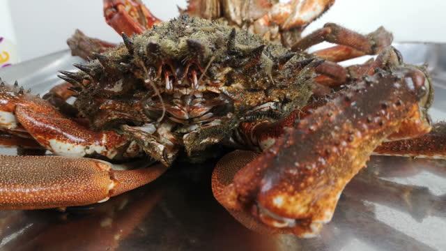 vidéos et rushes de spider crab - organisme aquatique