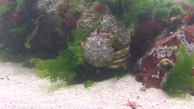spider crab - crab stock videos & royalty-free footage