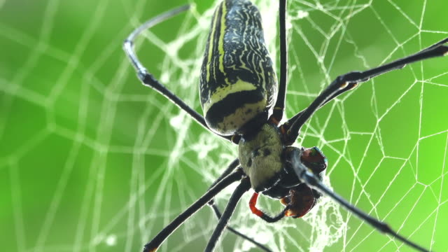 spider eating a beetle - spider stock videos & royalty-free footage