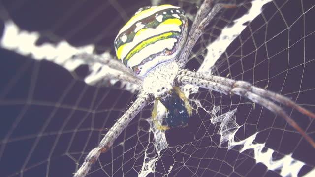 vidéos et rushes de araignée manger insectes - bouche des animaux