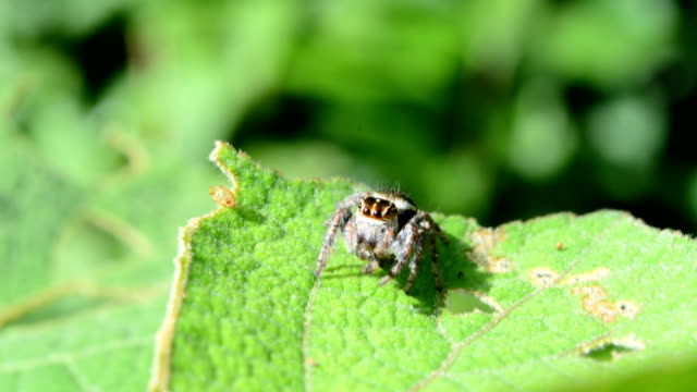 spider eating worm on green leaf - invertebrate stock videos & royalty-free footage